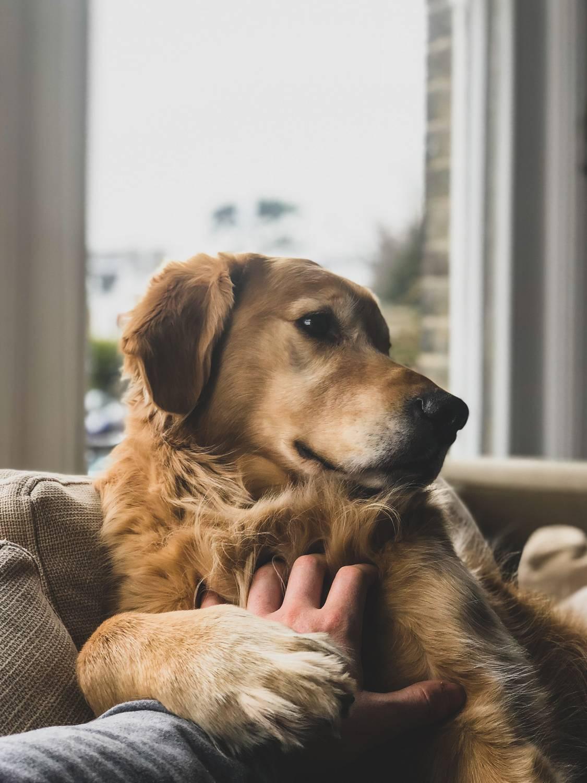 Ile kosztuje kremacja psa